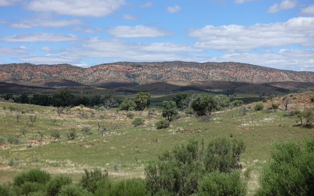 Bushwalking in the Flinders Ranges