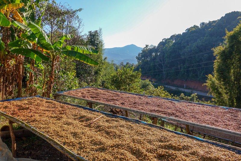 Coffee Chiang Rai