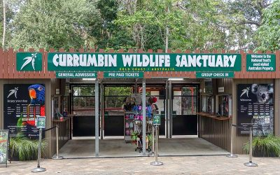 Currumbin Wildlife Sanctuary – A Gold Coast Must-See