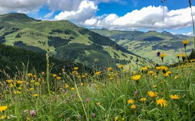 Summer in Saalbach-Hinterglemm, Austria