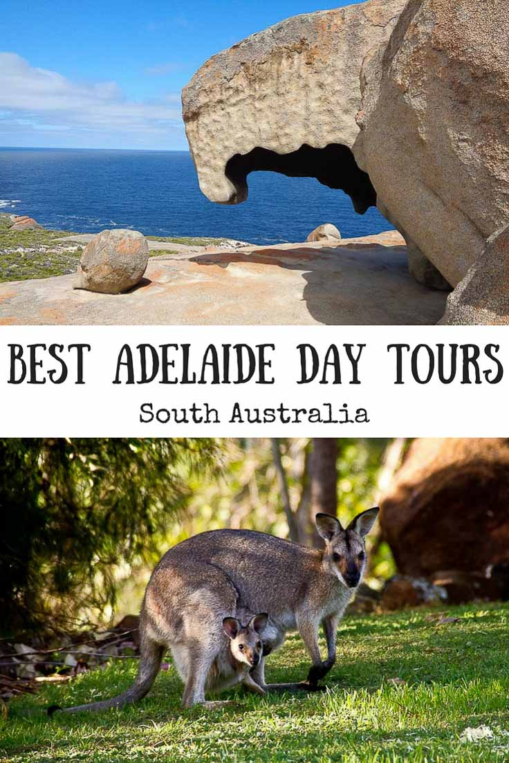 Best Adelaide Day Tours. A kangaroo and Remarkable Rocks.