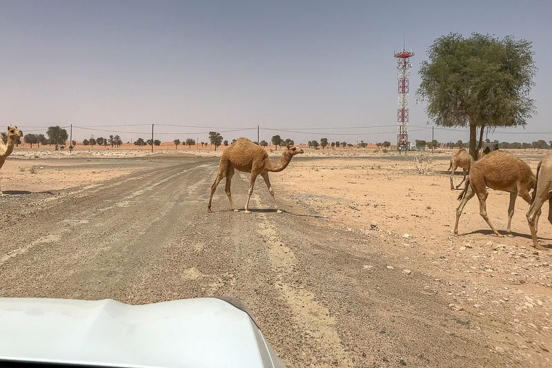 Desert Traffic Hazard