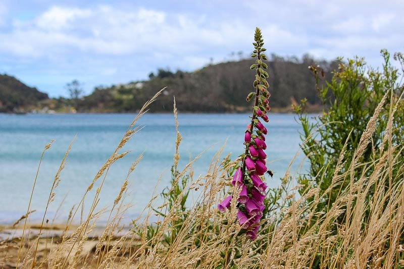 Things to do on Stewart Island, New Zealand